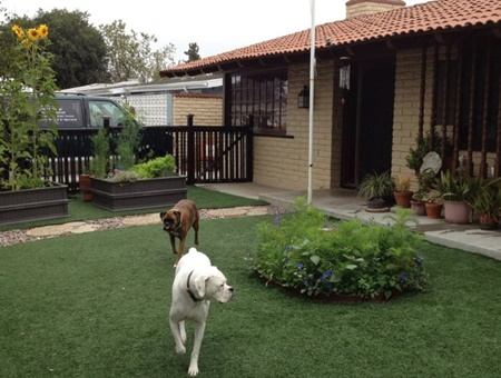 pet daycare in newport beach